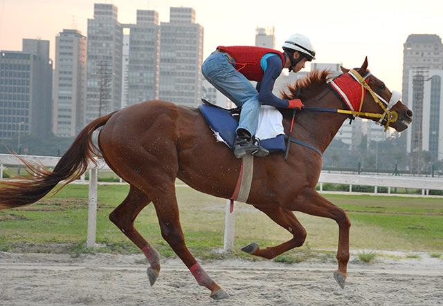 Grande Pr�mio Jockey Club de S�o Paulo vai fazer o Hip�dromo Paulistano tremer