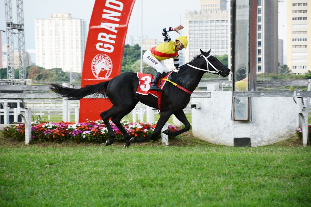 Nao Da Mais e Noblesse You : dobradinha do Haras Phillipson no G.P.Derby Paulista (G1)