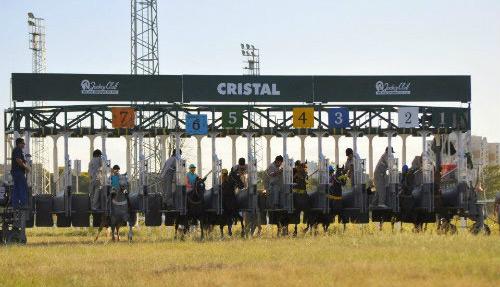 Hoje tem doze p�reos no Cristal a partir das 15h00 com apostas em S�o Paulo