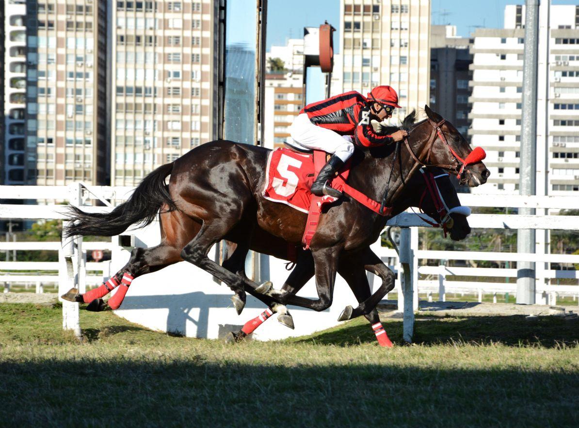 Salto Ol�mpico leva a melhor no G.P. Jockey Club de S�o Paulo